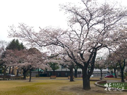 福島県福島市 新浜公園の桜 2020年3月31日 APC_0003