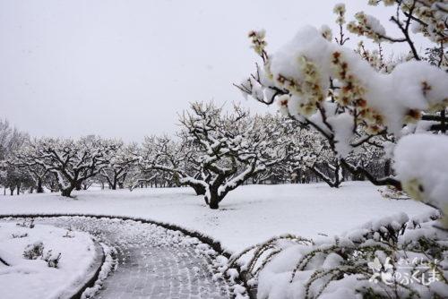 福島県福島市 あづま総合運動公園 2020年3月29日 DSC08114
