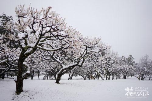 福島県福島市 あづま総合運動公園 2020年3月29日 DSC08120
