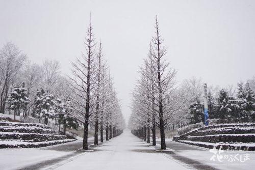 福島県福島市 あづま総合運動公園 2020年3月29日 DSC08122