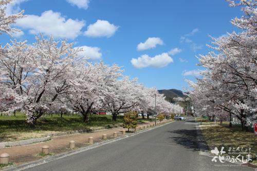 福島県福島市飯坂 乙和公園 2020年4月9日 写真1