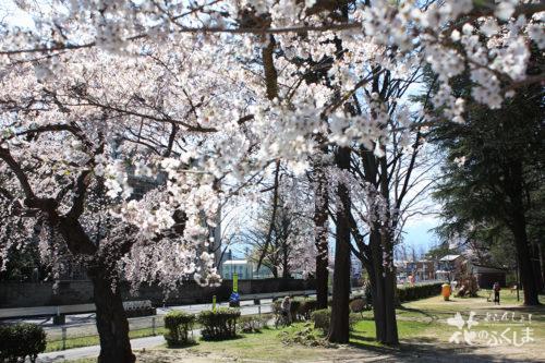 2020年4月3日 信夫山公園内児童遊園の桜_7015