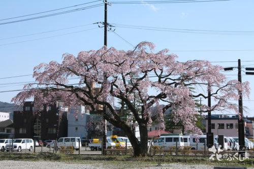 2020年4月3日福島地方裁判所のシダレザクラ_7034