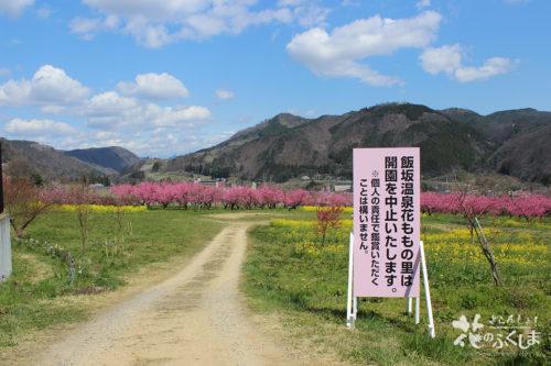 福島県福島市飯坂 花ももの里 2020年4月9日 写真1