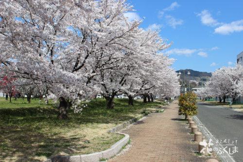 福島県福島市飯坂 乙和公園 2020年4月9日 写真3