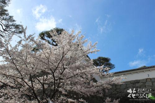 福島県二本松市 県立霞ヶ城公園(国指定史跡 二本松城跡)の桜 2020年4月10日 写真2