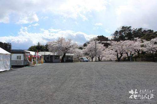 福島県二本松市 県立霞ヶ城公園(国指定史跡 二本松城跡)の桜 2020年4月10日 写真4