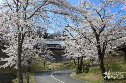 福島県二本松市 県立霞ヶ城公園(国指定史跡 二本松城跡)の桜 2020年4月10日 写真7