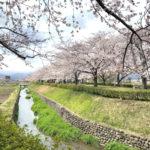 福島県福島市 荒川桜づつみ公園 2020年4月2日 IMG_5919