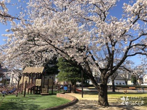 福島県福島市 新浜公園の桜 2020年4月3日 IMG_8952