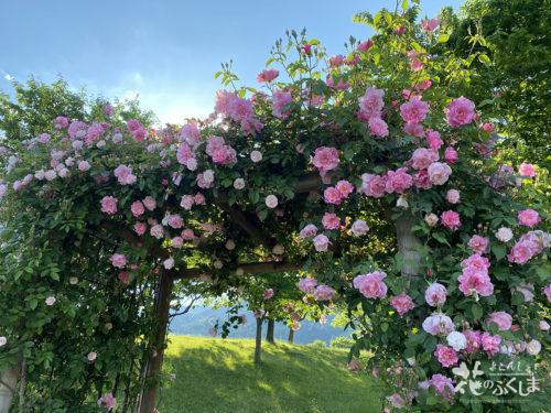 福島県福島市あづま総合運動公園香りのバラ園_2020年5月30日_画像10_6019