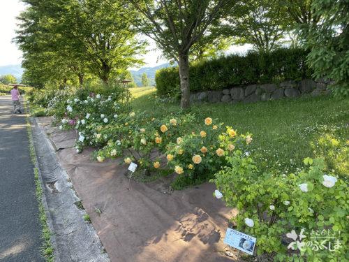 福島県福島市あづま総合運動公園香りのバラ園_2020年5月30日_画像11_6023
