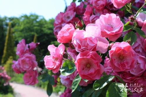 福島県福島市 四季の里 2020年6月9日 IMG_7156