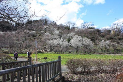 福島県福島市 花見山公園 2018年3月23日 IMG_0183