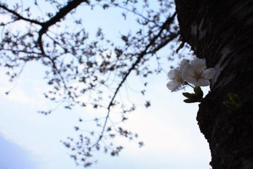 福島県福島市 新浜公園 2018年3月29日 IMG_0262