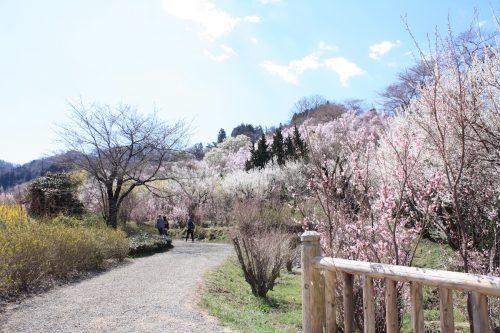 福島県福島市 花見山公園 2018年3月30日 IMG_0283