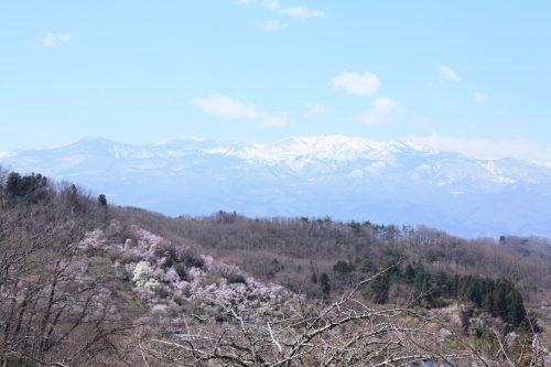福島県福島市 花見山公園 2018年3月30日 IMG_0312