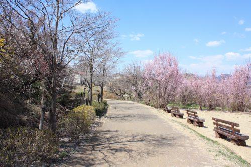 福島県福島市 花見山公園 2018年3月30日 IMG_0319
