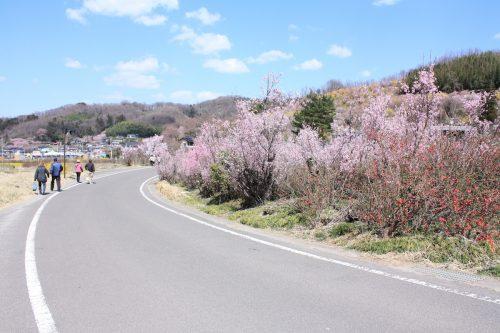 福島県福島市 花見山公園 2018年3月30日 IMG_0321