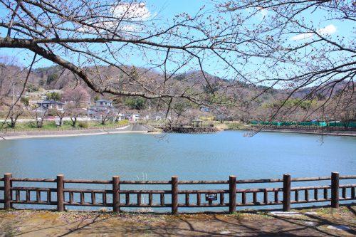 福島県福島市 茶屋沼公園 2018年3月30日 IMG_0338