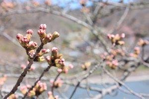 福島県福島市 茶屋沼公園 2018年3月30日 IMG_0341