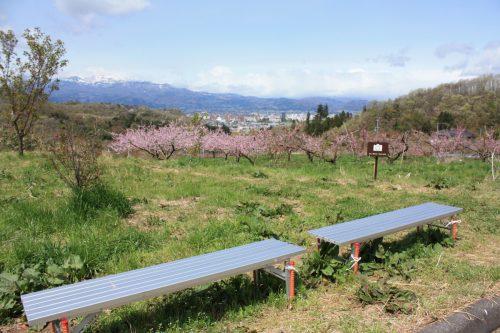 福島県福島市 花見山公園 2018年4月16日 IMG_0698