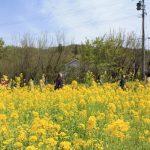 福島県福島市 花見山公園 2018年4月16日 IMG_0703