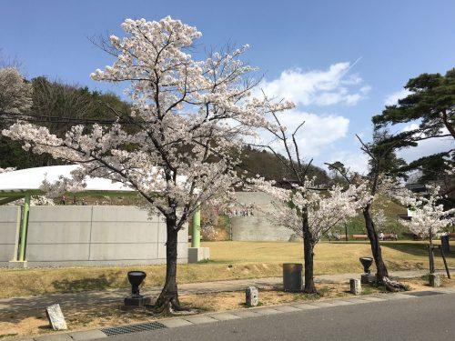 福島県福島市 信夫山公園 2018年4月5日 IMG_3092
