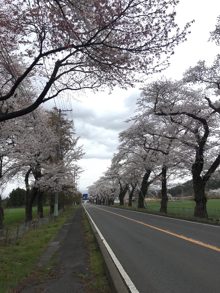 福島県福島市 畜産試験場 2018年4月7日 IMG_3104