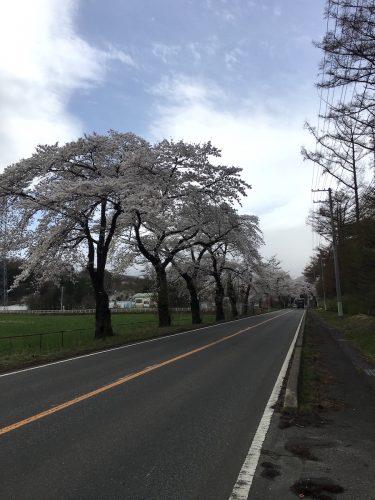 福島県福島市 畜産試験場 2018年4月7日 IMG_3105