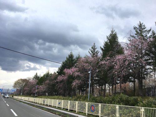 福島県福島市 あづま総合運動公園 2018年4月7日 IMG_3106