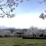 福島県福島市 あづま総合運動公園 2018年4月7日 IMG_3107