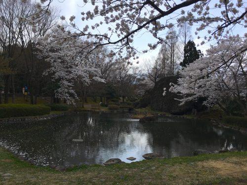 福島県福島市 あづま総合運動公園 2018年4月7日 IMG_3109