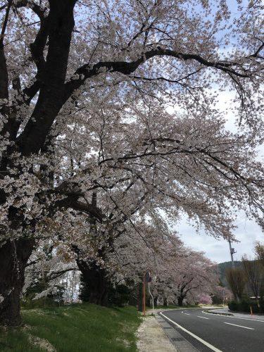福島県福島市 清水学習センター 2018年4月7日 IMG_3112