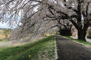 福島県福島市 清水学習センター 2018年4月7日 IMG_3115