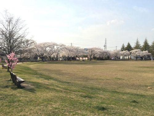 福島県福島市 野田中央公園 2018年4月3日 IMG_3121