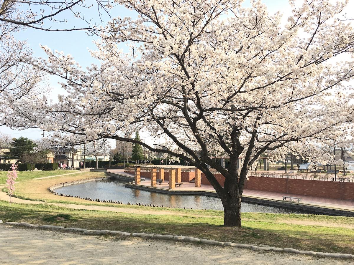 福島県福島市 野田中央公園 2018年4月3日 IMG_3122