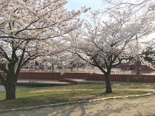 福島県福島市 野田中央公園 2018年4月3日 IMG_3125