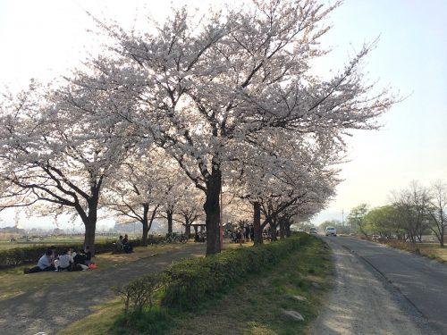 福島県福島市 荒川桜づつみ公園 2018年4月3日 IMG_3135