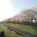 福島県福島市 荒川桜づつみ公園 2018年4月3日 IMG_3141
