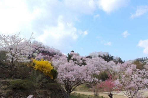 福島県福島市 花見山公園 2018年4月4日 IMG_7927