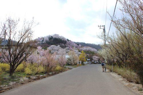 福島県福島市 花見山公園 2018年4月4日 IMG_7936