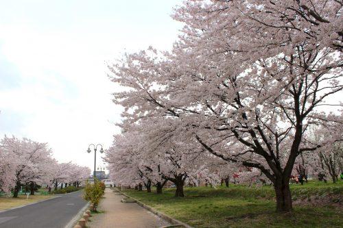 福島県福島市 乙和公園 IMG_7966