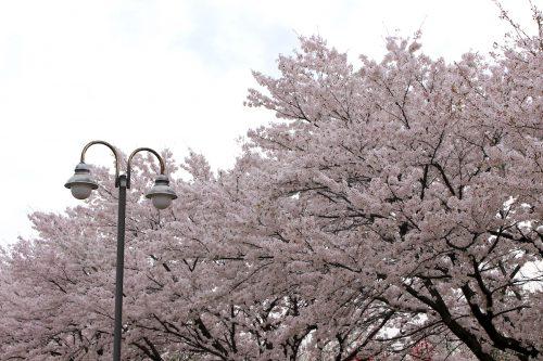 福島県福島市 乙和公園 IMG_7968