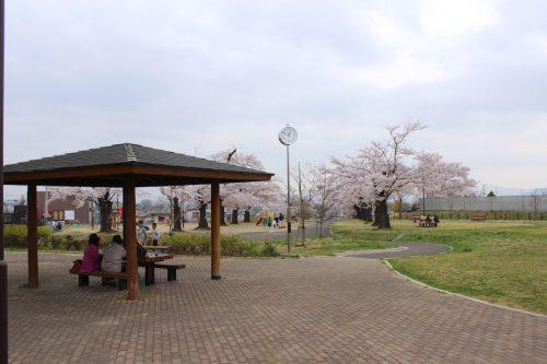 福島県福島市 乙和公園 2018年4月6日 IMG_7970