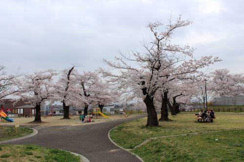 福島県福島市 乙和公園 2018年4月6日 IMG_7972