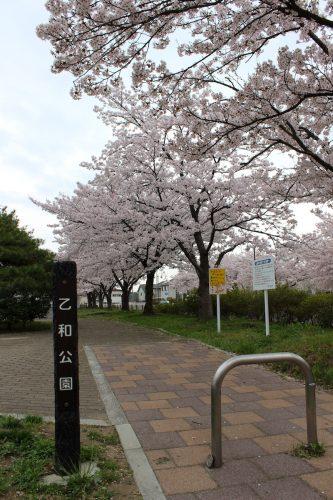 福島県福島市 乙和公園 2018年4月6日 IMG_7973