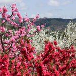 福島県福島市 飯坂温泉 花ももの里 2018年4月16日 IMG_8000