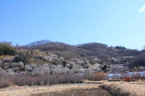 福島県福島市 花見山公園 2019年3月13日 IMG_5660