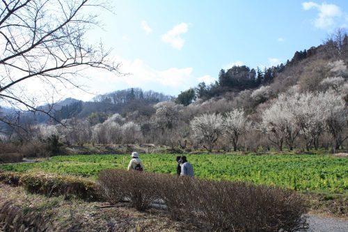 福島県福島市 花見山公園 2019年3月13日 IMG_5663